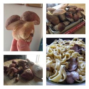 Tagliatelle di kamut ai funghi porcini